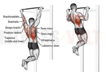 引體向上-使用肌群
