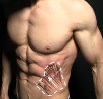 腹肌訓練 - 腹內斜肌
