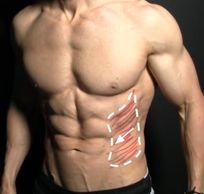 腹肌訓練 - 腹外斜肌