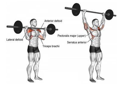 槓鈴肩推 - 訓練肌群