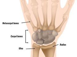 手腕解剖學