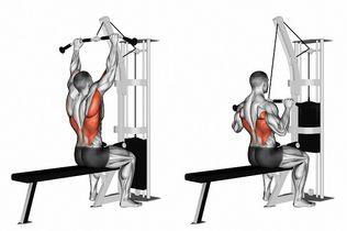 滑輪下拉可以練到哪些肌群?訓練部位