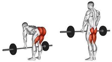 羅馬尼亞硬舉可以練哪裡?訓練肌群