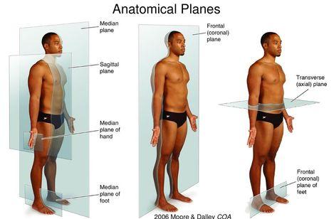 不同角度刺激臀部